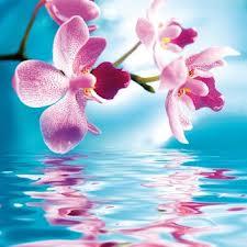 Envole-toi par-delà les mots - Page 5 Orchid10