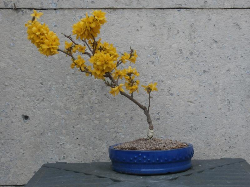 mes bonsaïs - Page 8 12avri10