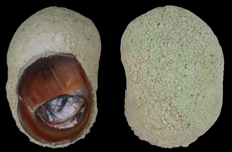 Petite découverte au Vanuatu Neriti11