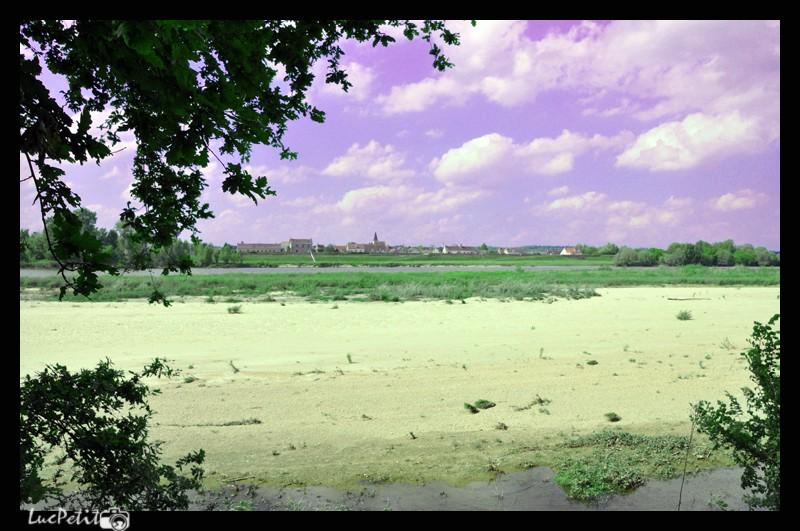 La  Loire, paysage, faune - Page 5 Plus_d10
