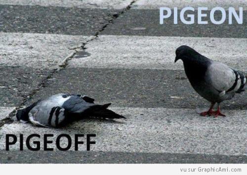On vas retourner aux pigeons voyageur ... Pigeon10