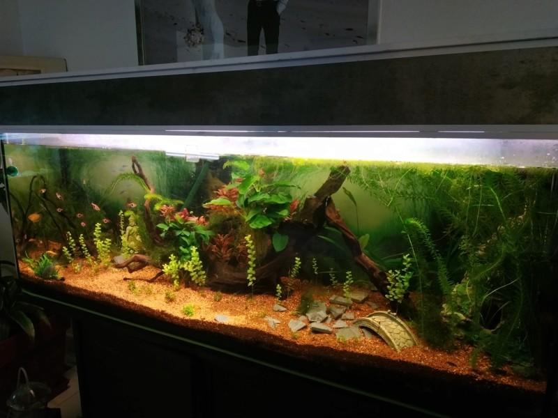 Suivi Aquarium 300L 20190110
