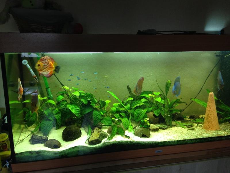Une ménagerie aquatique Img_2623