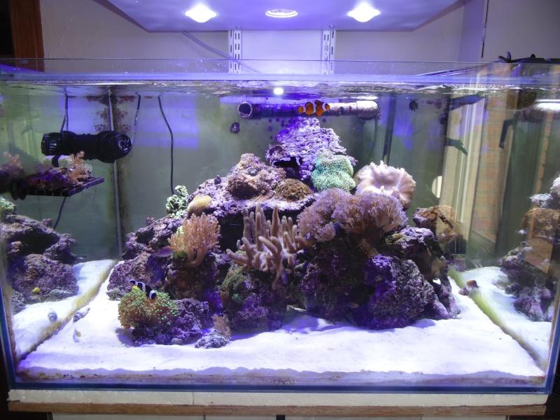 mon nouvel aquarium  - Page 6 Dsc06510