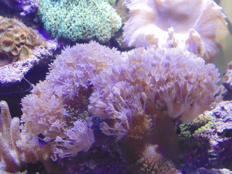 mon nouvel aquarium  - Page 6 Dsc06513