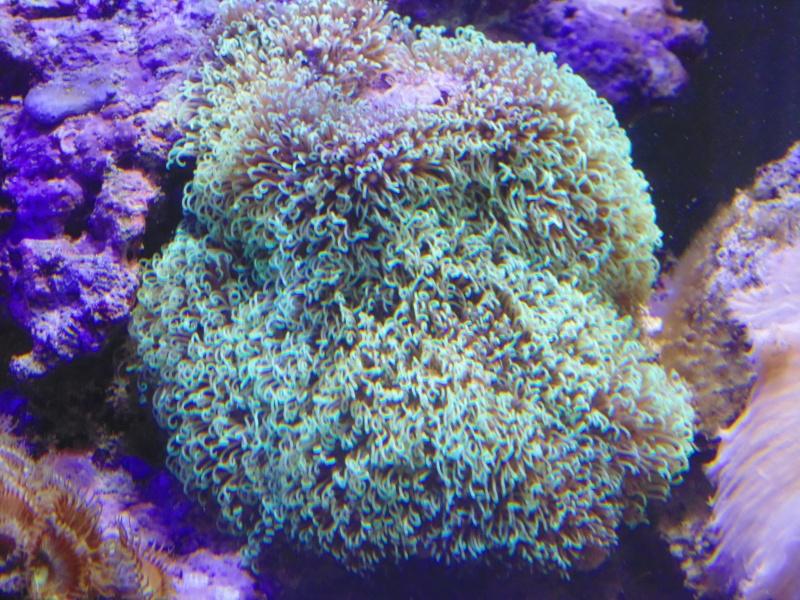mon nouvel aquarium  - Page 6 Dsc06514