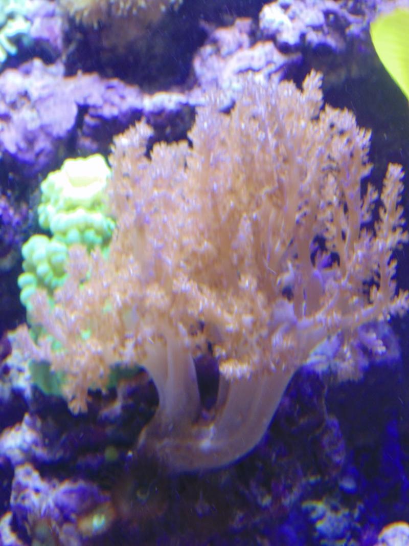 mon nouvel aquarium  - Page 6 Dsc06515