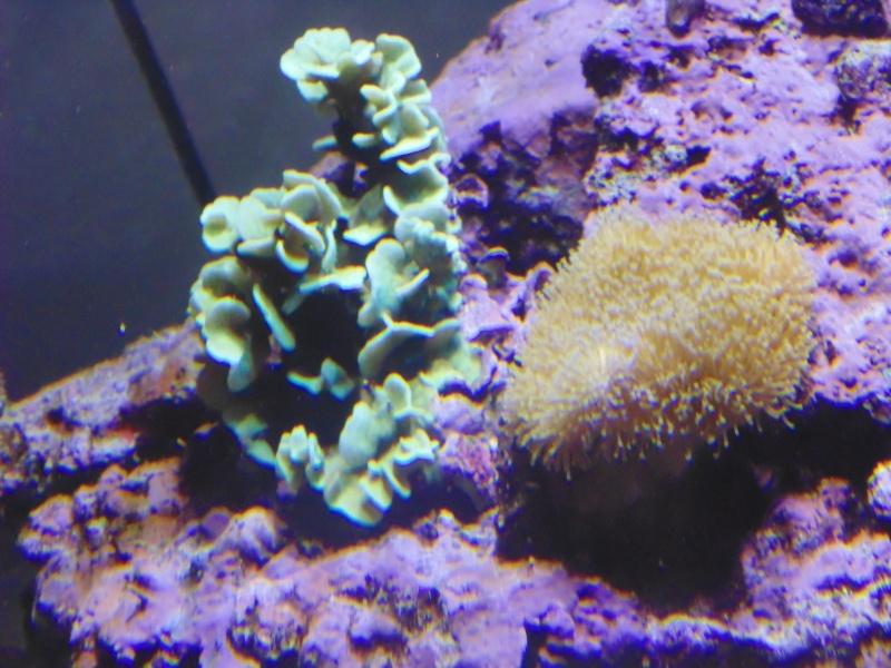 mon nouvel aquarium  - Page 6 Dsc06516