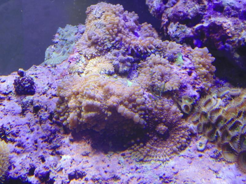 mon nouvel aquarium  - Page 6 Dsc06517