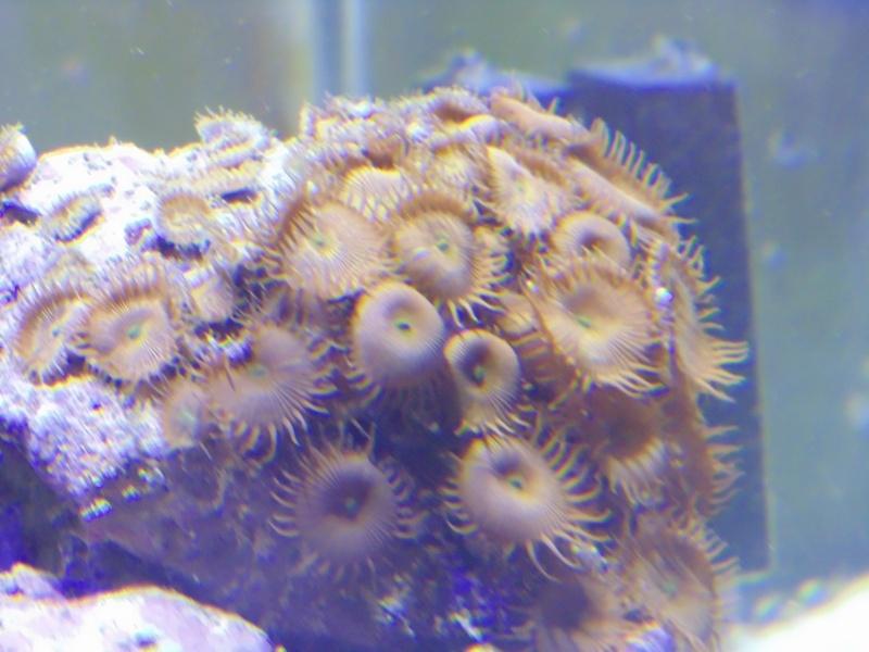 mon nouvel aquarium  - Page 6 Dsc06518