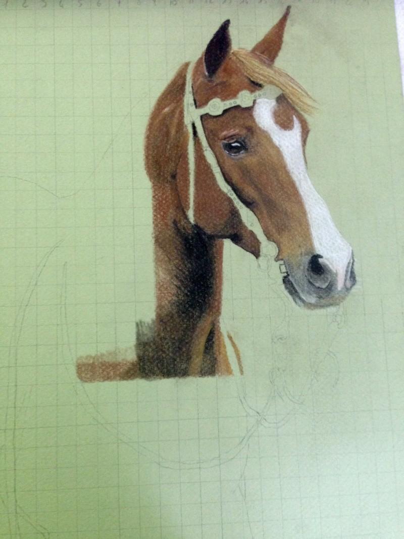 \FINI A FERMER SVP/ Portrait d'un cheval aux pastels Fullsi10