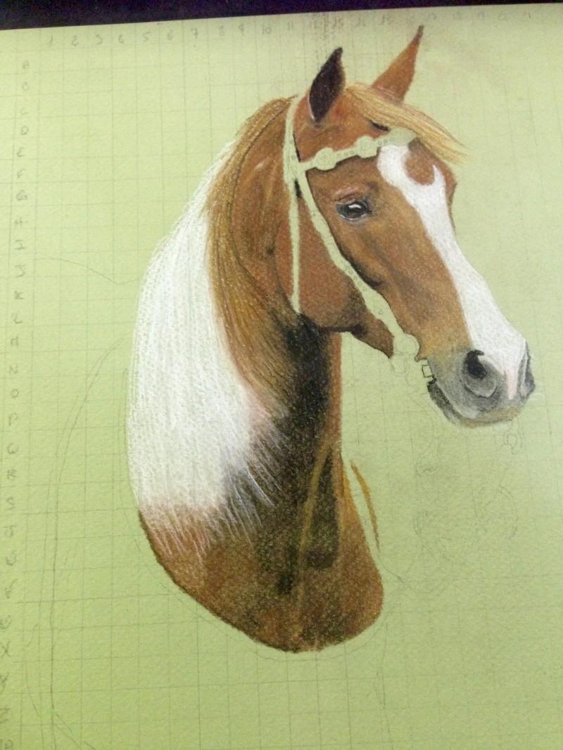 \FINI A FERMER SVP/ Portrait d'un cheval aux pastels Fullsi11