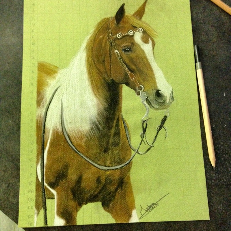 \FINI A FERMER SVP/ Portrait d'un cheval aux pastels Img_0213