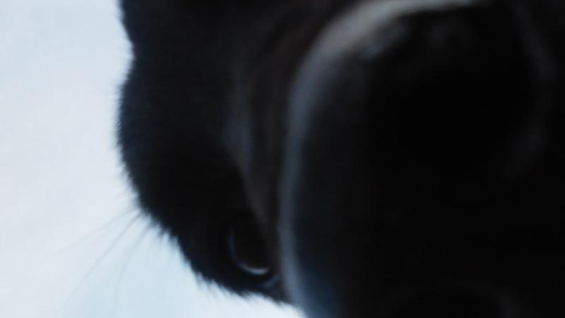 Grumpy Dog & CO 20150311