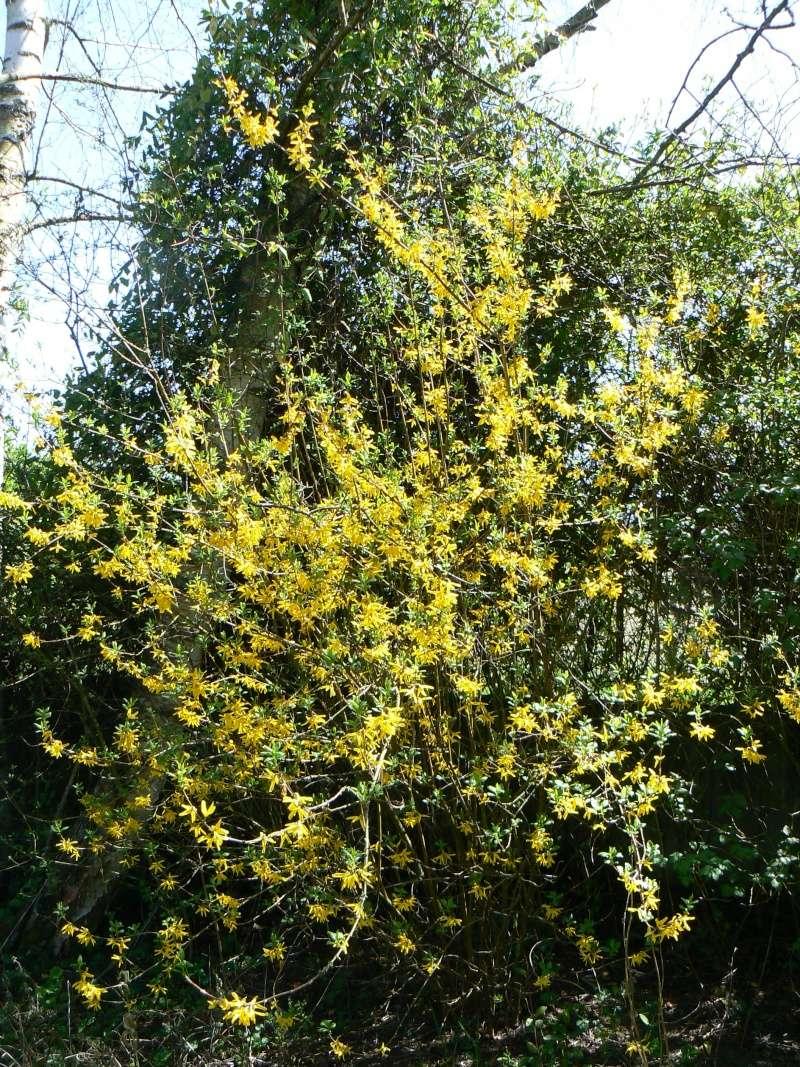 Vos plantes, fleurs, jardin !  P1230811