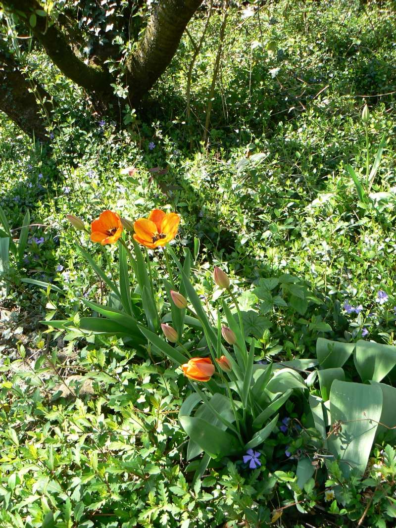 Vos plantes, fleurs, jardin !  P1230812