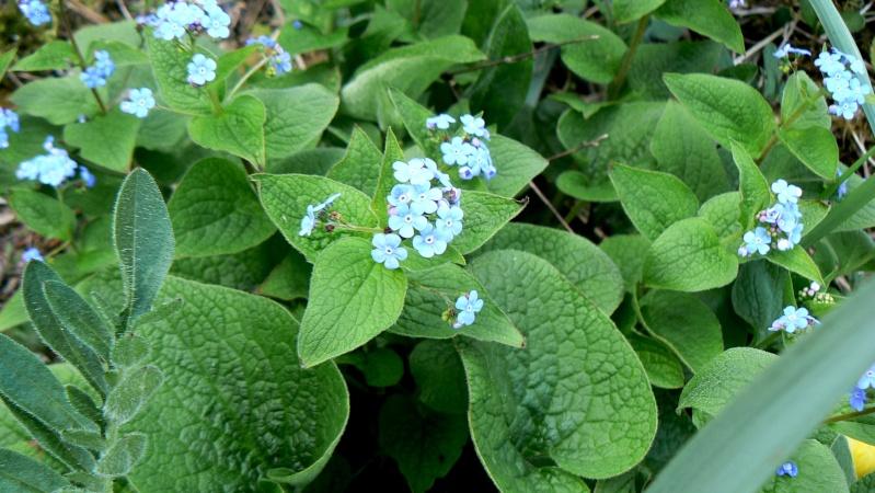 Vos plantes, fleurs, jardin !  P1230813