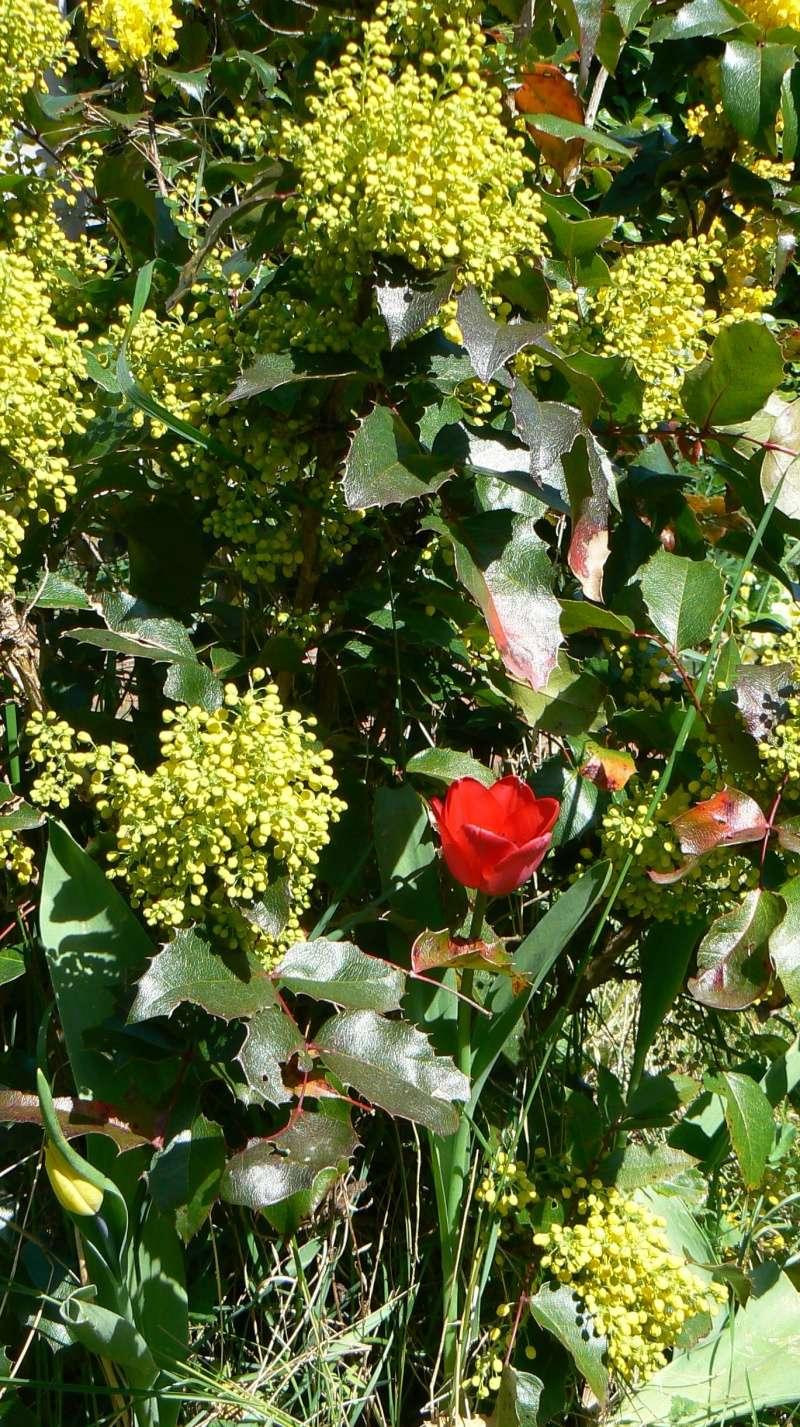 Vos plantes, fleurs, jardin !  P1230814