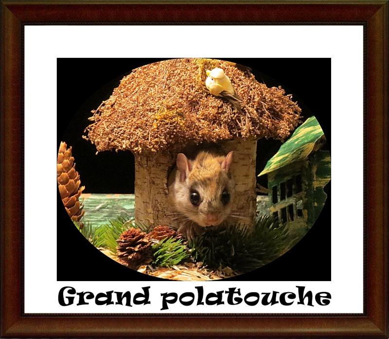 Grand polatouche  Polato10