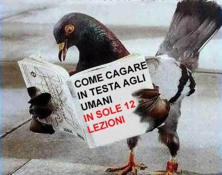 SOS escremento di uccello - Pagina 2 Piccio10