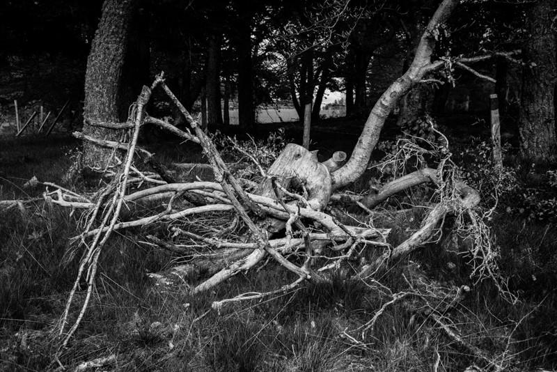 l'araignée Dsc00110