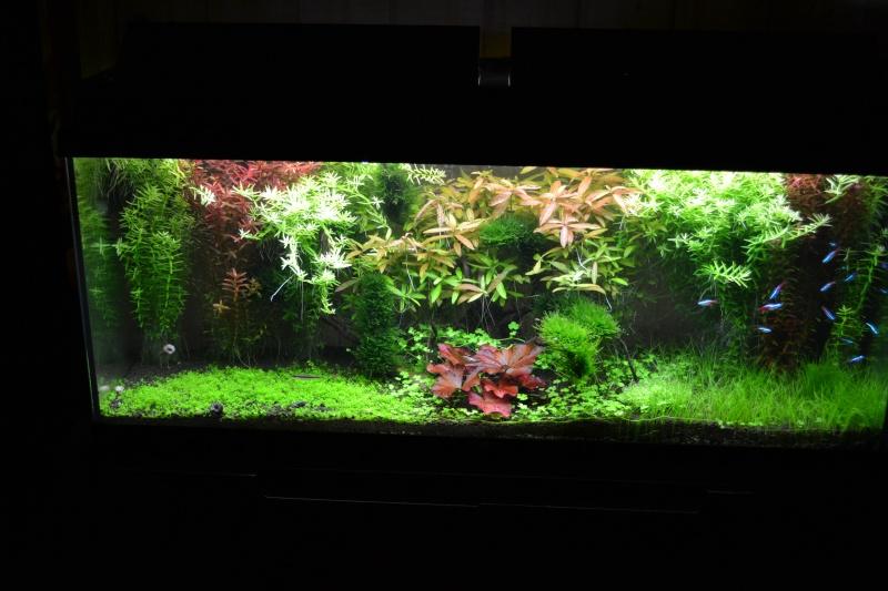 [62] Vends plantes diverses de mon aquarium Dsc_0010
