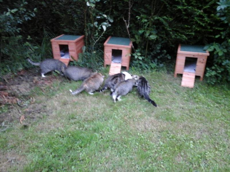 Abris reçus grâce à Animal WebAction  20150512
