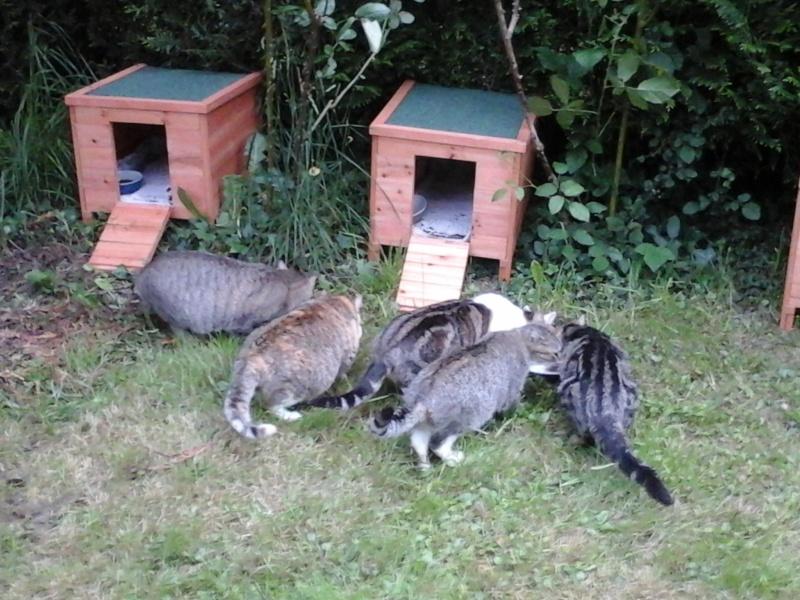 Abris reçus grâce à Animal WebAction  20150513