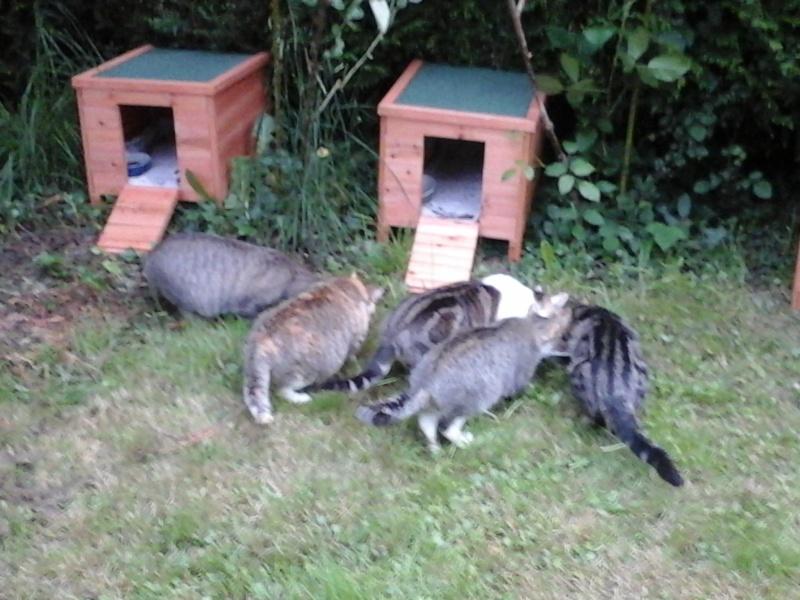 Abris reçus grâce à Animal WebAction  20150514