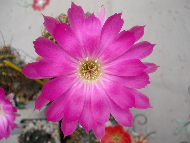 Blüten aus 2014 - Seite 2 148