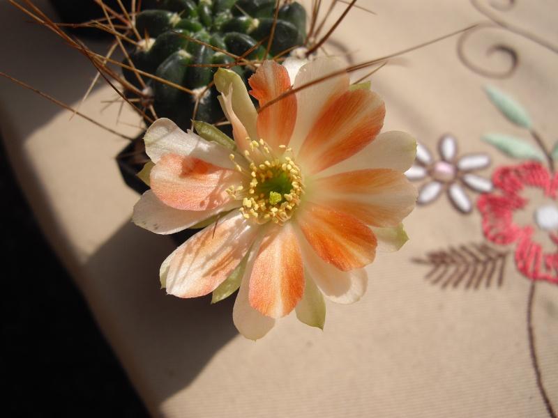 Blüten aus 2014 - Seite 2 219