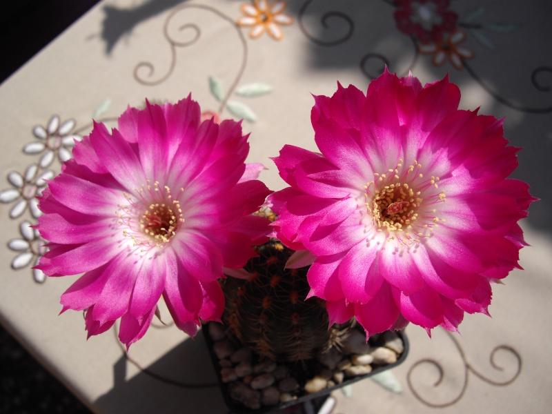 Blüten aus 2014 - Seite 2 315