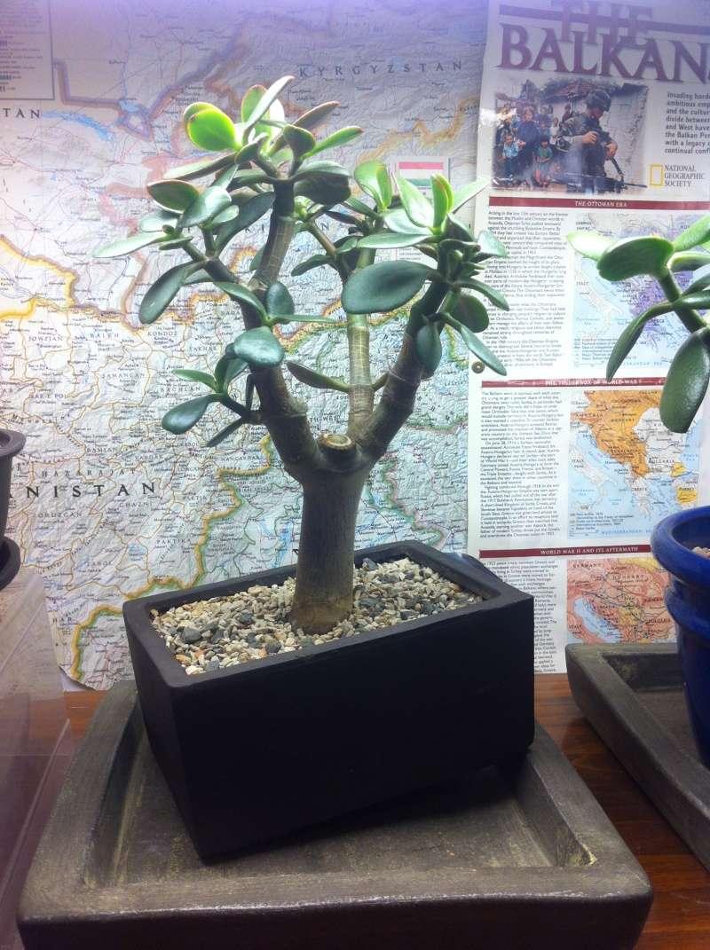 Crassula Pruning Img_2510