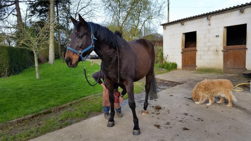 Les 3 GPLV du Cotentin - adoptés par Sylvain alias Vano50 20150413