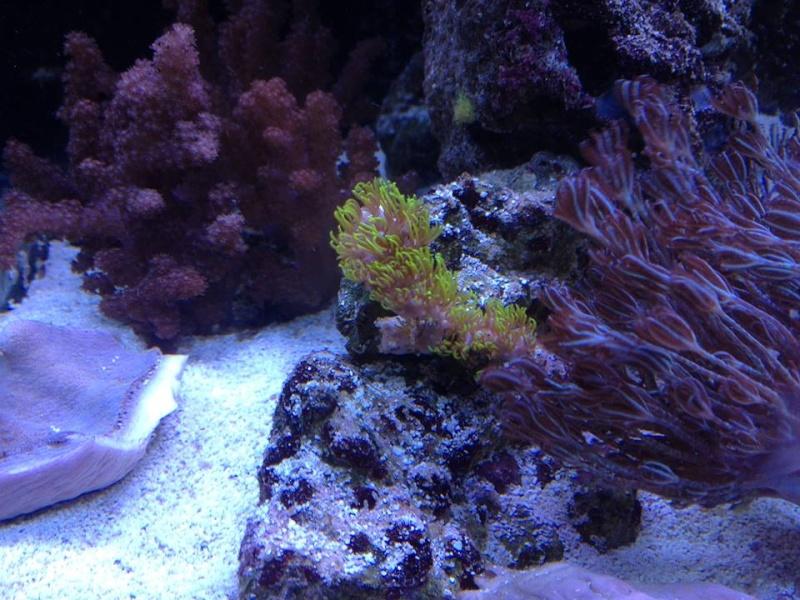 Reef de Gégé84 - Page 2 311