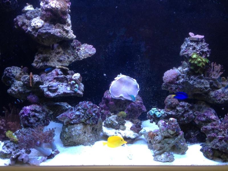 Reef de Gégé84 - Page 2 512