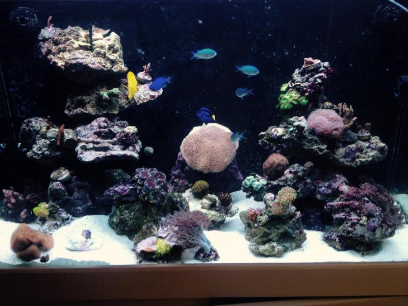 Reef de Gégé84 - Page 2 Vue_du10