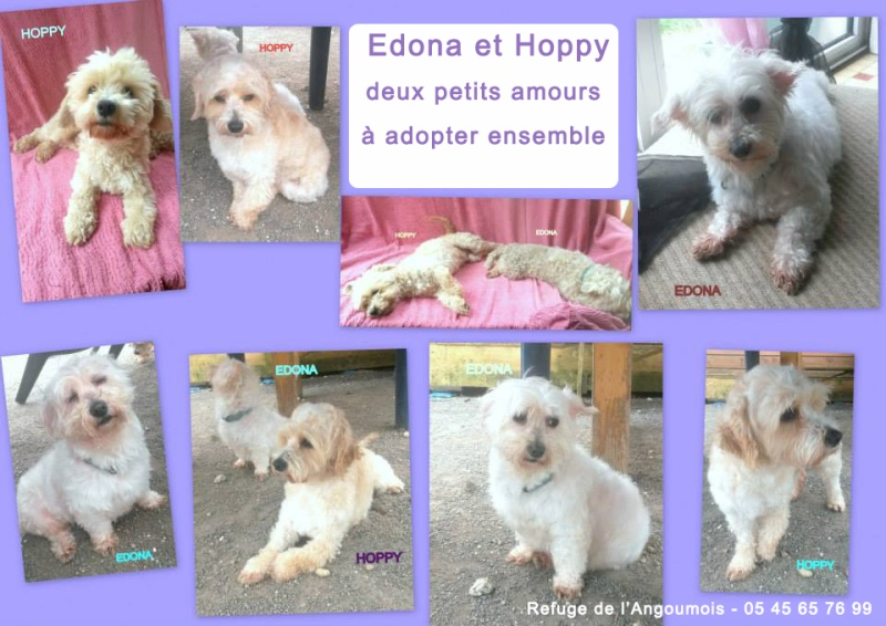 EDONA x Bichon 250269810605996 Edona_11