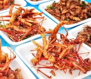 Mangiare insetti al ristorante ? E' possibile in Belgio! Insett10