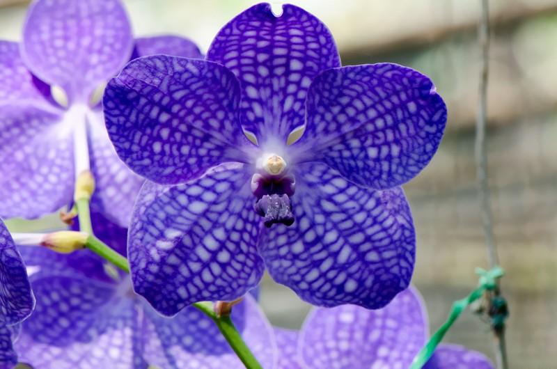 Rêver avec le réel, paysages - Page 13 Orchid10