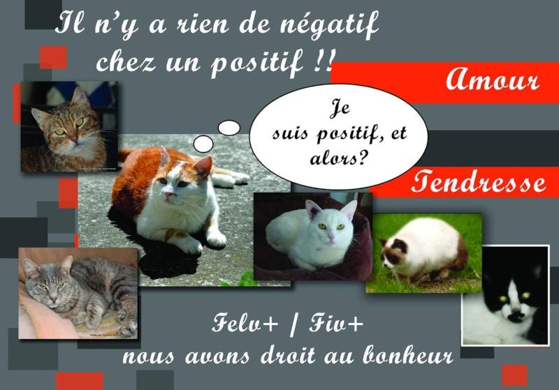 Nos positifs !! 45 amours de chats à adopter - Page 3 Fiv10