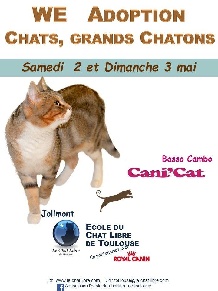 [ Adoptions ] Tous les samedis 14h - 18h chez CANICAT : suspendu 2_et_310