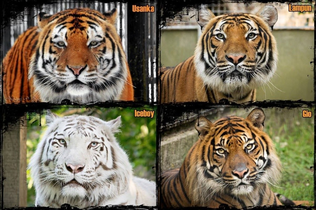 Repainting a TIGER in ``Kosta`s style`` :D - Page 2 10986910