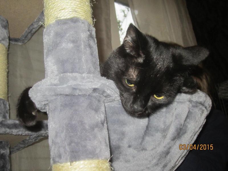Noiraud - noir yeux verts né en 2013 Img_2311