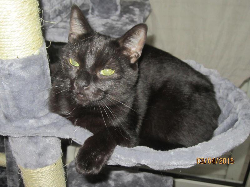 Noiraud - noir yeux verts né en 2013 Img_2312
