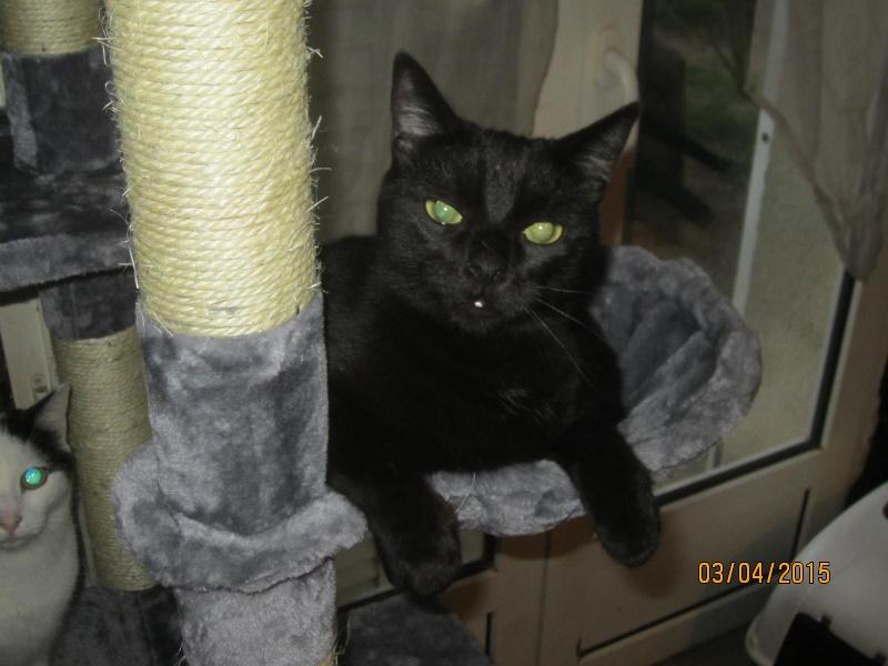 Noiraud - noir yeux verts né en 2013 Img_2313