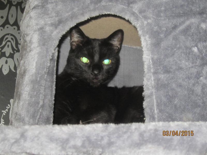 Noiraud - noir yeux verts né en 2013 Img_2315