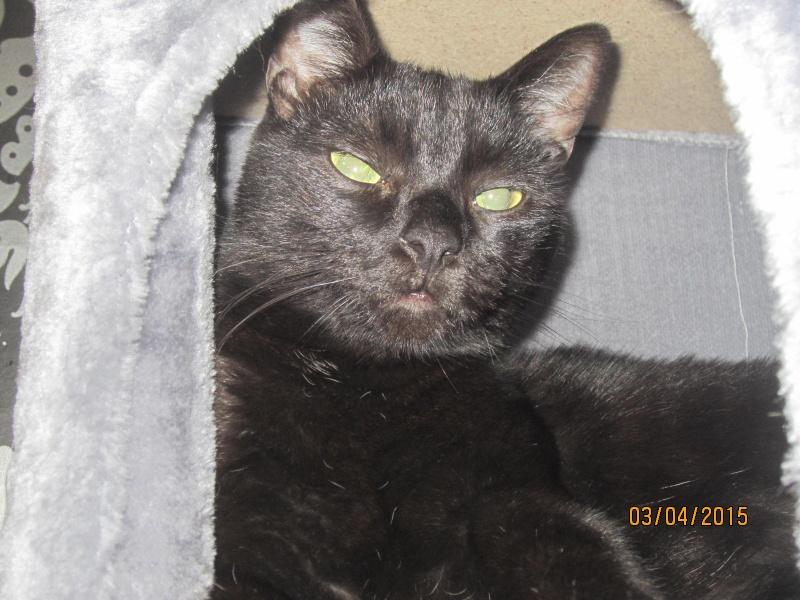 Noiraud - noir yeux verts né en 2013 Img_2316