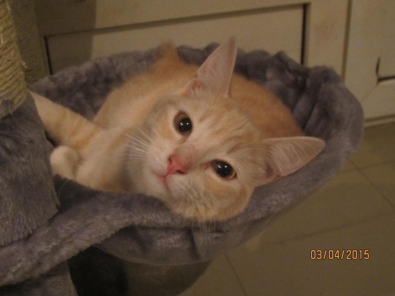 Hamour - Petit coeur trouvé la queue inerte et incapable d'uriner seul est marrainé :) Img_2325