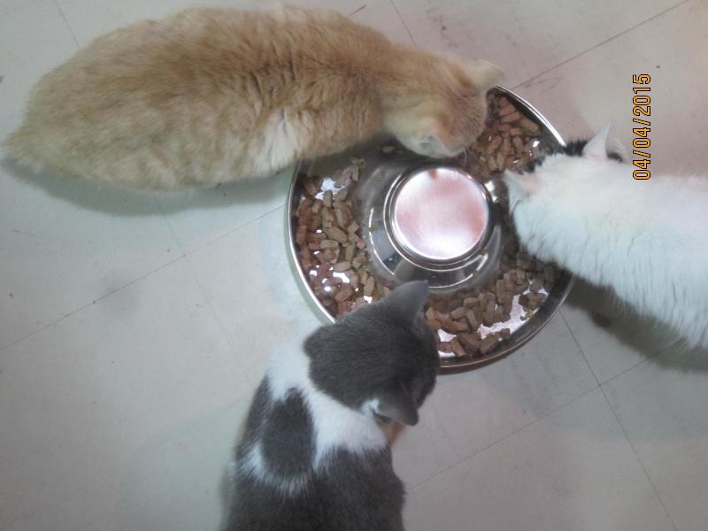 Hamour - Petit coeur trouvé la queue inerte et incapable d'uriner seul est marrainé :) Img_2510
